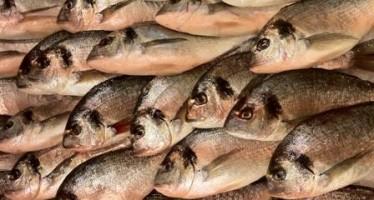 The fish converter – helping Aussies understand British seafood