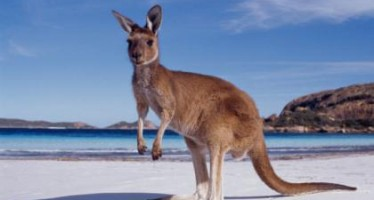 Enjoy the Australian lifestyle and culture