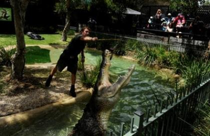 Elvis_the_Crocodile_attacks