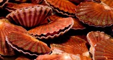 A chef's secret to succulent scallops