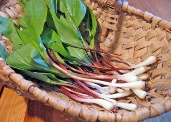 wild garlic bulbs