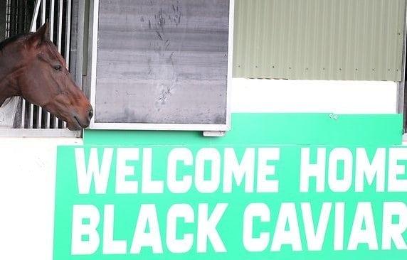 Black Caviar Home