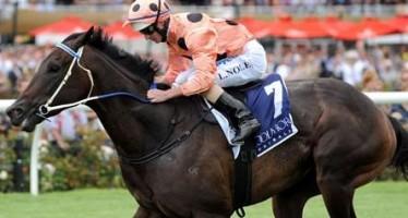 Peter Moody says horse racing's Black Caviar may be back