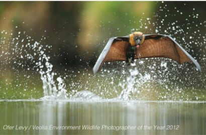 Ofer Levy / Veolia Environment Wildlife Photographer of the Year 2012