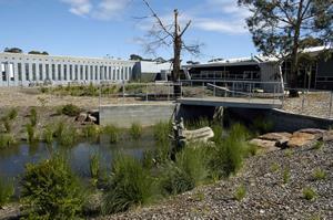 Bentleigh Secondary College wetlands