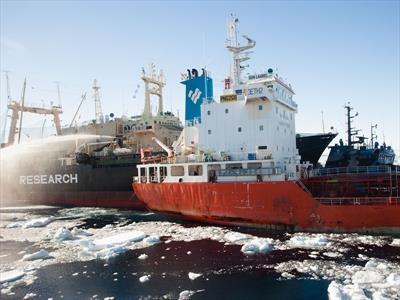 Whaling in Antarctica