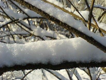 800px-Fresh_snow