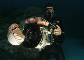 Great Barrier Reef Online on YouTube