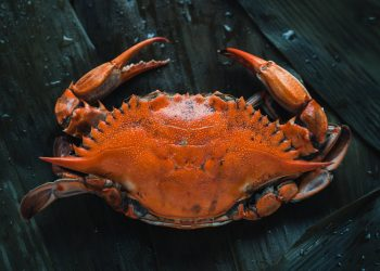 Crab on sour dough