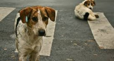 Various things you can do to help a stray dog