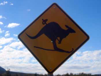 skiing kangaroo