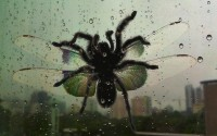 9 reasons why Aussie spiders make the best pets