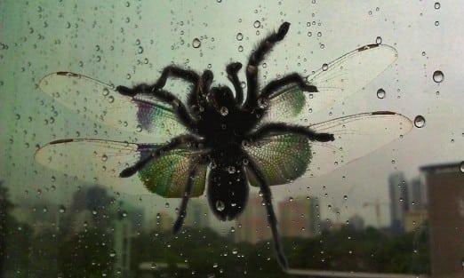 Australian flying spider