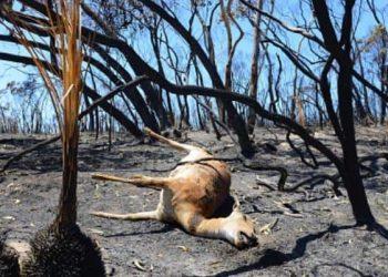 Australia bushfires 2015 - Getty 461037642