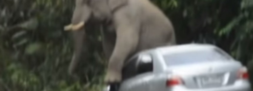 Elephant attacks and trashes cars [VIDEO]