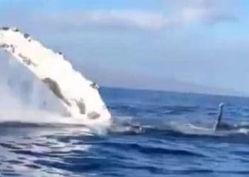 whale ram boat video