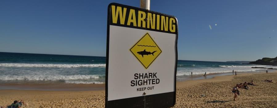 Australia - shark - sign closed