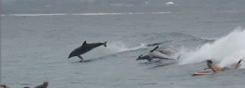 Dolphins teach surfers a thing or two at Byron Bay [video]