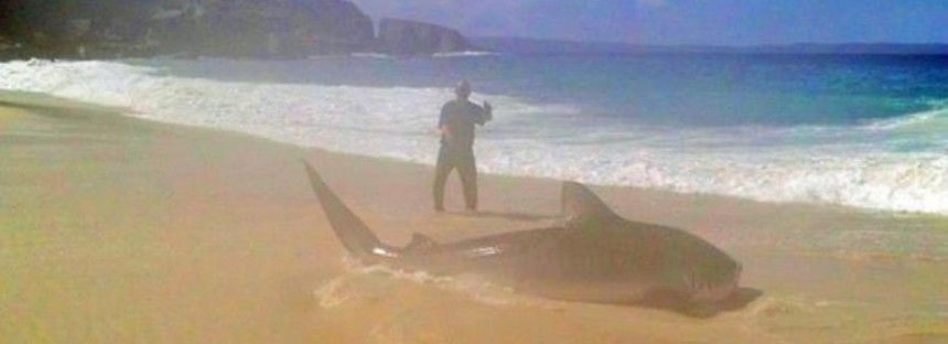 Bloke lands this massive shark on a handline