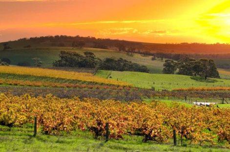 sa wine landscape