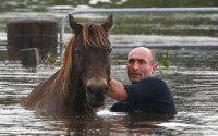Surfer hero saves five horses from Dungog flood waters