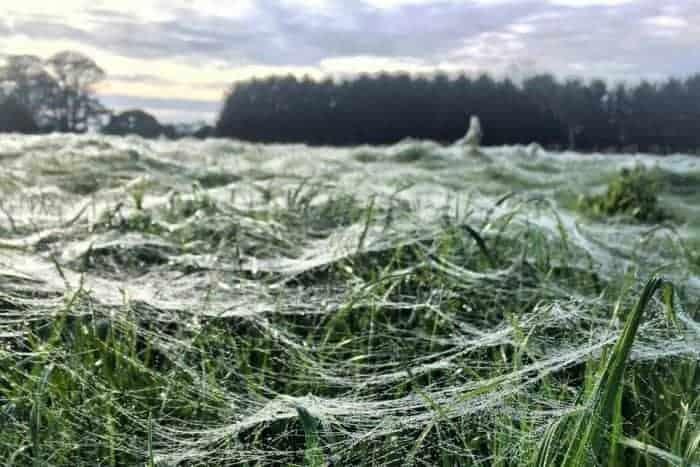 spider webs1