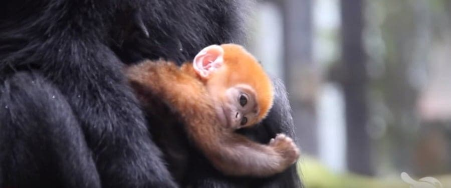 baby monkey pumpkin