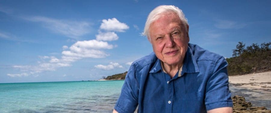 Celebrities Flock To Attenborough Premiere At Australia