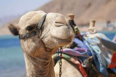Travel Talk_Egypt Tours_Dahab