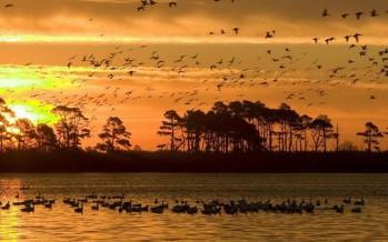 Tips on protecting the wildlife of Australia