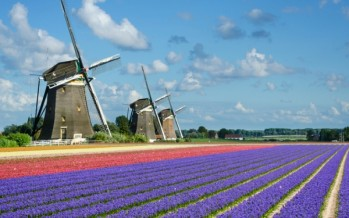 Quadruple Dutch: Windmills, waterways, tulips and cheese