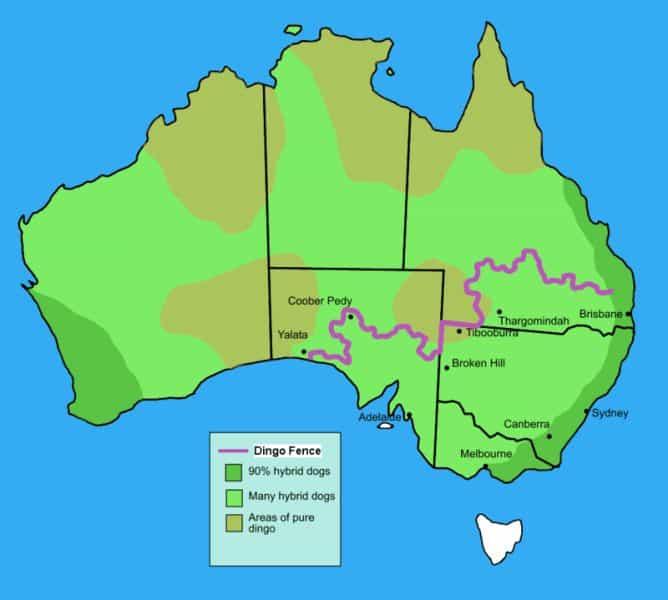 800px-Dingo_fence_in_Australia