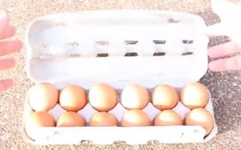 The outrageous way to cook an egg in Australia [WATCH]