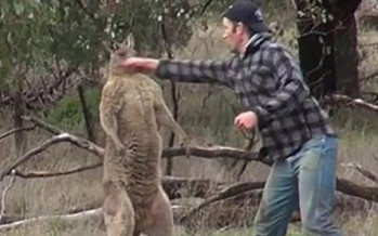Real or fake? Bloke punching kangaroo in the face to save his dog [VIDEO]