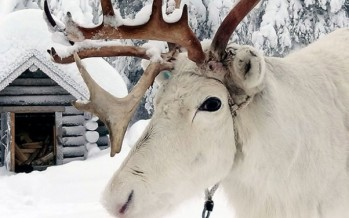 15 photos that prove Lapland is the most magical place to be at Christmas