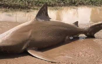 Sharknado for real! Check out what Cyclone Debbie dropped on the road