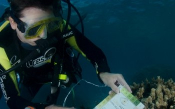 Feeling helpless about the Great Barrier Reef? Here's one way you can really help