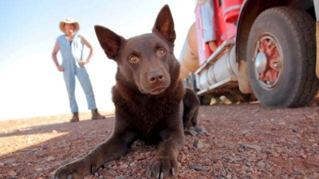 'Red Dog: True Blue', the pooch prequel to 2011 family classic 'Red Dog' will be getting its London premiere.