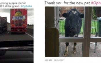 Ireland craics us up with hilarious Twitter response to Hurricane Ophelia