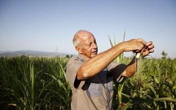 "Australian Senate hears SA farmers ""will not receive"" special visa treatment"
