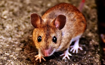 London is teeming with mice, you have been warned