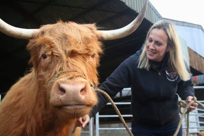 Aberdeenshire Angus beef farm (c) Kris Griffiths