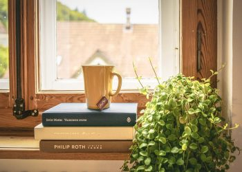 Book Read Tea Literature Window Sill Houseplant