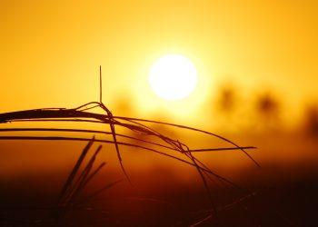The world endured 2 extra heatwave days per decade