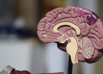 How brains do what they do