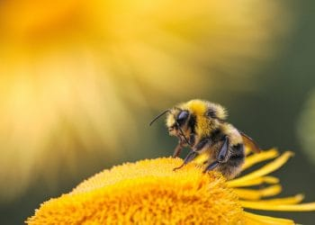 Honey bees can't practice social distancing