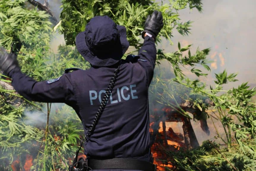 The seized cannabis going up in smoke. Photo credit: NSW Police