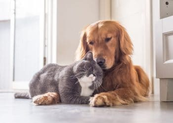 What are the advantages of using CBD oil for pets?