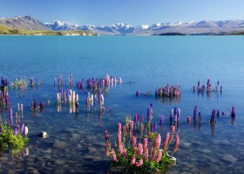 Best places to visit in New Zealand's South Island