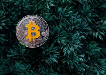 All the information about bitcoin cash you should know